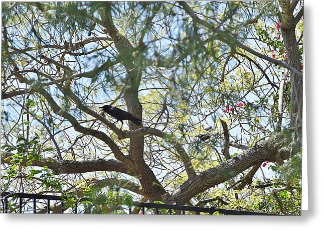 Black Top Greeting Cards - Two Ravens in Pine Tree Greeting Card by Linda Brody