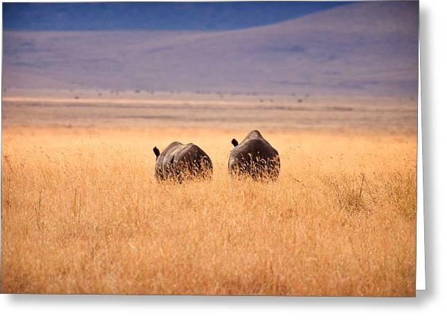 Rhinoceros Greeting Cards - Two Rhinos Greeting Card by Adam Romanowicz