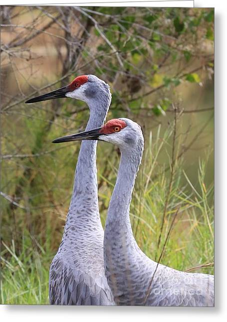 Two Sandhills In Green Greeting Card by Carol Groenen