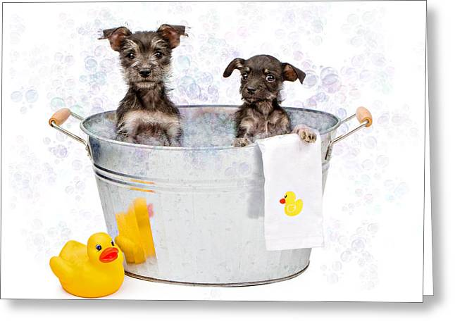 Full-length Portrait Photographs Greeting Cards - Two Scruffy Puppies in a Tub Greeting Card by Susan  Schmitz