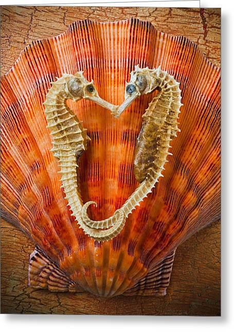 Sea Life Photographs Greeting Cards - Two seahorses on seashell Greeting Card by Garry Gay