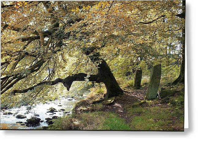 Two Standing Stones Beside Hebden Water In Autumn  Greeting Card by Philip Openshaw