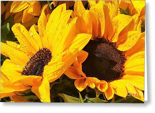 Bloosom Greeting Cards - Two Sunflowers On The Rain by Jasna Gopic Greeting Card by Jasna Gopic