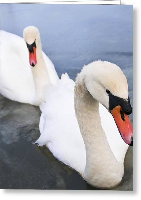 White Swan Greeting Cards - Two Swans Greeting Card by Svetlana Sewell