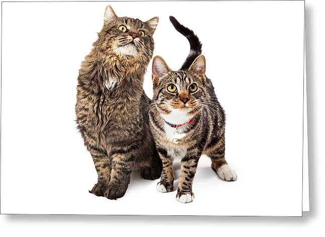 Two Tabby Cats Looking Up Greeting Card by Susan Schmitz