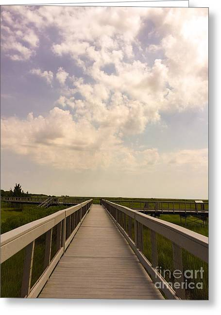 Wildlife Refuge. Greeting Cards - The Way Forward Greeting Card by Tom Gari Gallery-Three-Photography