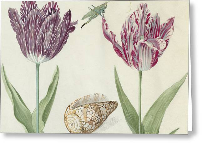 Grasshoppers Greeting Cards - Two Tulips a shell and a grasshopper Greeting Card by Jacob Marrel
