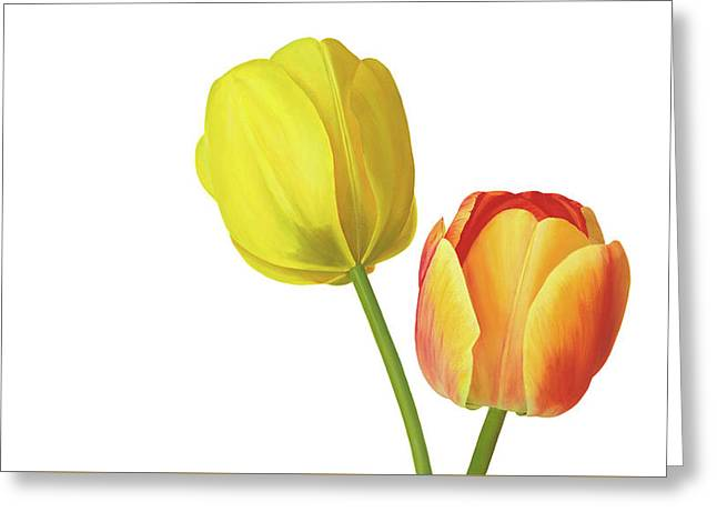 Two Tulips Greeting Card by Rita Magos