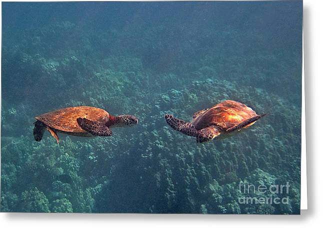 Green Sea Turtle Greeting Cards - Two Turtle Tango Greeting Card by Bette Phelan