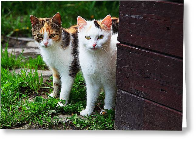 Pairs Greeting Cards - Two young cats Greeting Card by Queso Espinosa