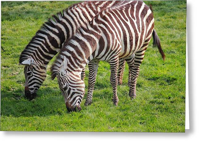 Zebra Picture Prints Greeting Cards - Two Zebras Greeting Card by Mike and Angela Murdock