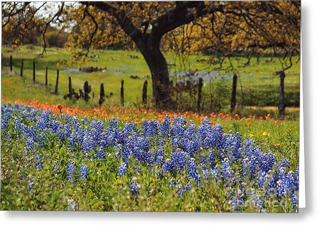 Tx Tradition, Bluebonnets Greeting Card by Lisa Spencer