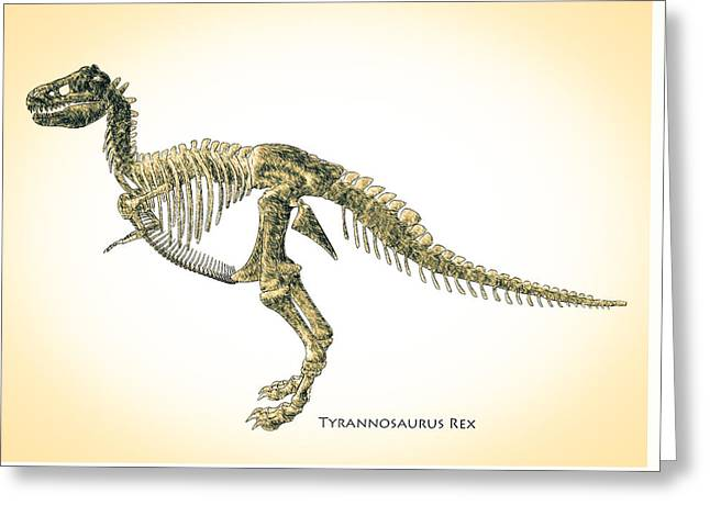 Biology Greeting Cards - Tyrannosaurus Rex Skeleton Greeting Card by Bob Orsillo