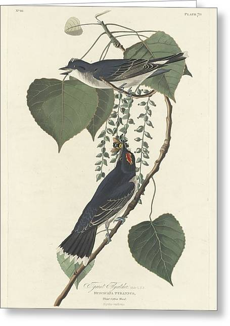 Small Bird Greeting Cards - Tyrant Flycatcher Greeting Card by John James Audubon