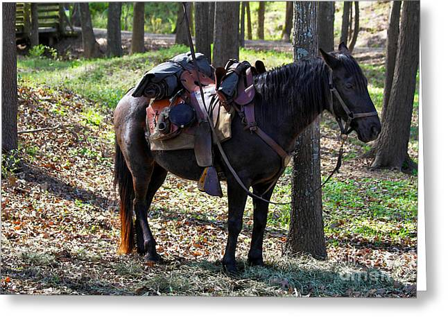 Division Greeting Cards - U. S. Cavalry Horse in Texas Greeting Card by Catherine Sherman