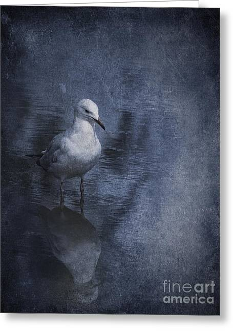 Gull Seagull Greeting Cards - Ubiquitous Greeting Card by Jan Pudney