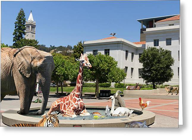 Uc Berkeley Welcomes You To The Zoo Please Do Not Feed The Animals Square And Text Greeting Card by Wingsdomain Art and Photography