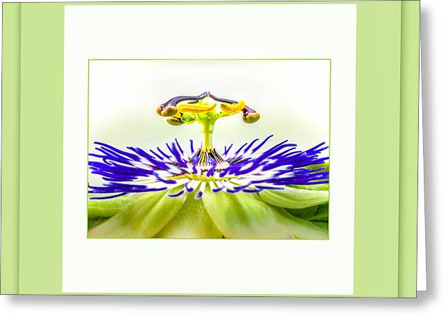Passiflora Greeting Cards - Ufo 2 Greeting Card by Mona Stut