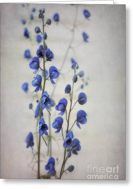 Ultramarine  Greeting Card by Priska Wettstein