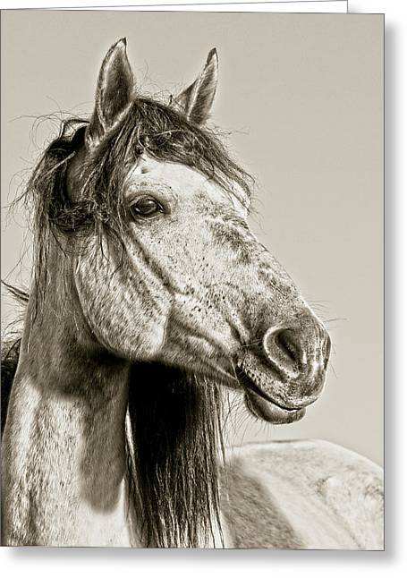 Wild Horses Greeting Cards - Unbroken Greeting Card by Ron  McGinnis