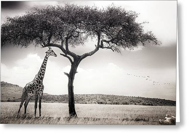 Kenya Greeting Cards - Under The African Sun Greeting Card by Piet Flour