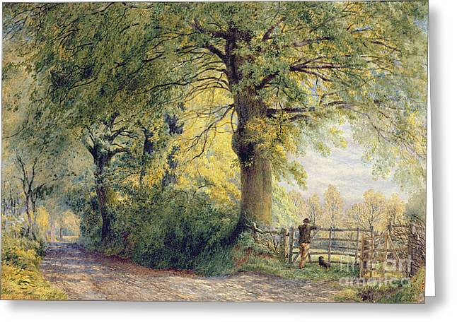 Dog Walking Greeting Cards - Under the Beeches Greeting Card by John Steeple