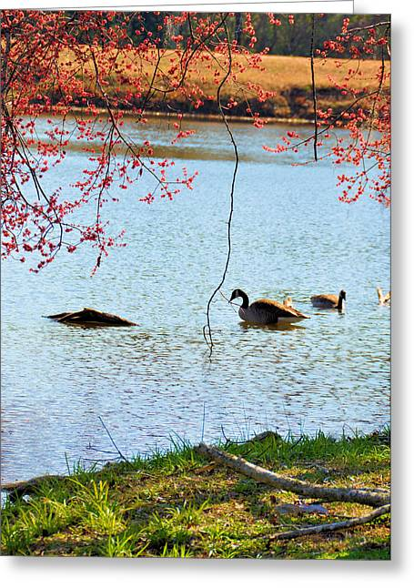 Thomasville Greeting Cards - Under The Blossoms Greeting Card by Jan Amiss Photography