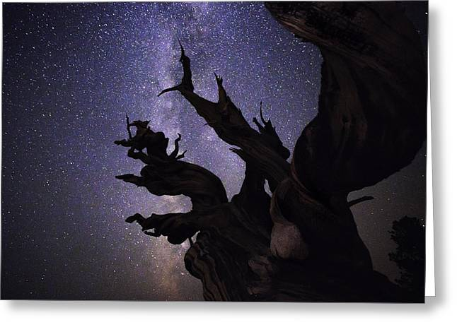 Under The Bristlecone Tree Greeting Card by Jerome Obille