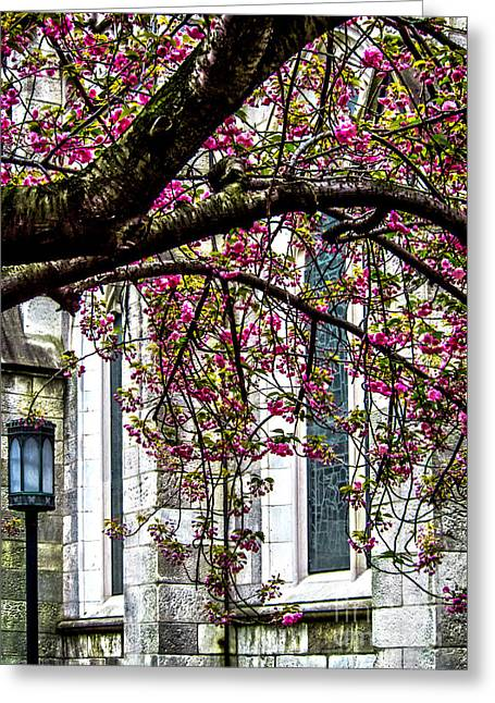 Flower Design Greeting Cards - Under the Cherry Tree Greeting Card by James Aiken