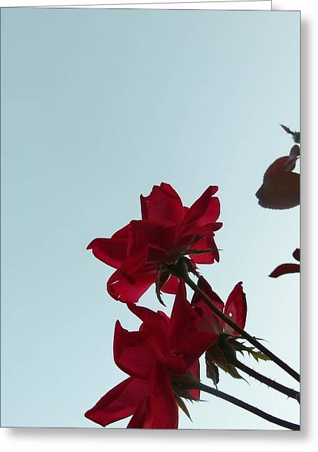 Sunset Posters Greeting Cards - Under the Rose Sunset II Greeting Card by Justin Moore