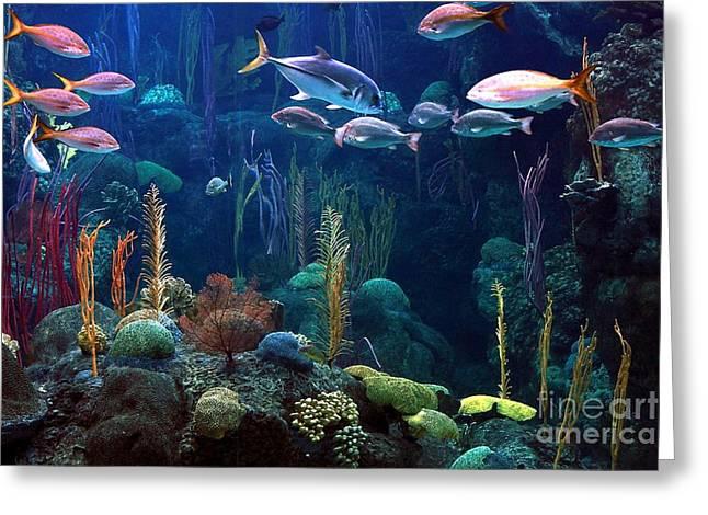 Under The Sea 3 Greeting Card by Randy Matthews