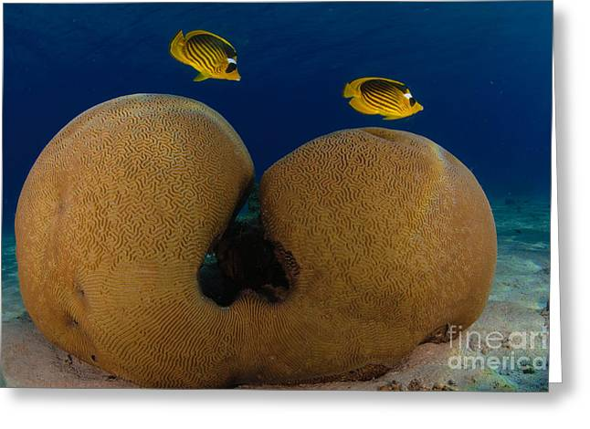 Under The Sea Greeting Card by Hagai Nativ