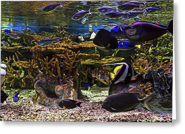 Aquarium Fish Greeting Cards - Under the Sea Greeting Card by Janet Fikar