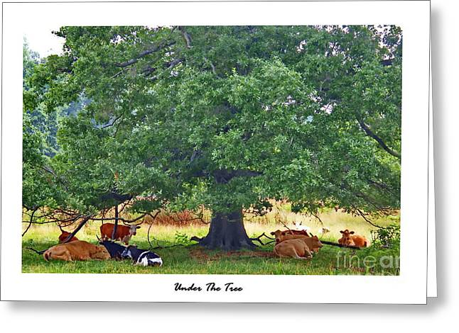 The Trees Greeting Cards - Under The Tree Greeting Card by Marcel  J Goetz  Sr
