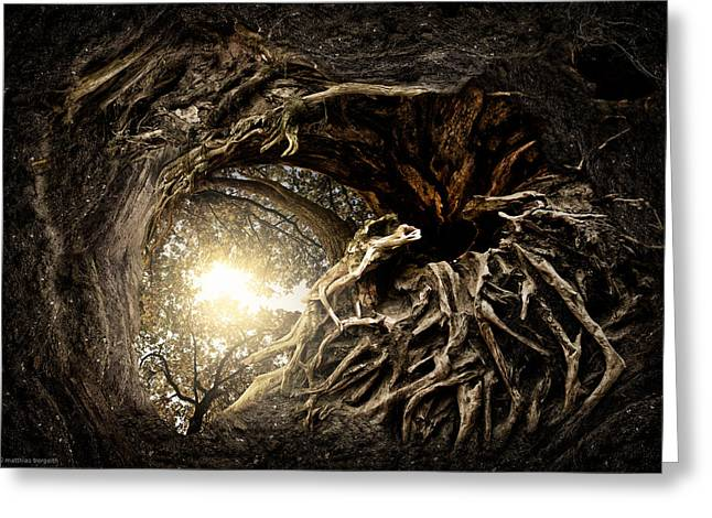 Tree Roots Greeting Cards - Under The Trees #1 Greeting Card by Matthias Bergolth
