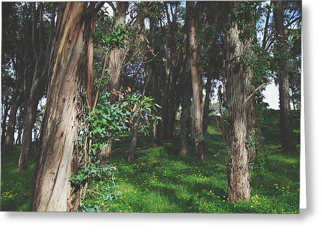 Eucalyptus Greeting Cards - Under Your Spell Greeting Card by Laurie Search