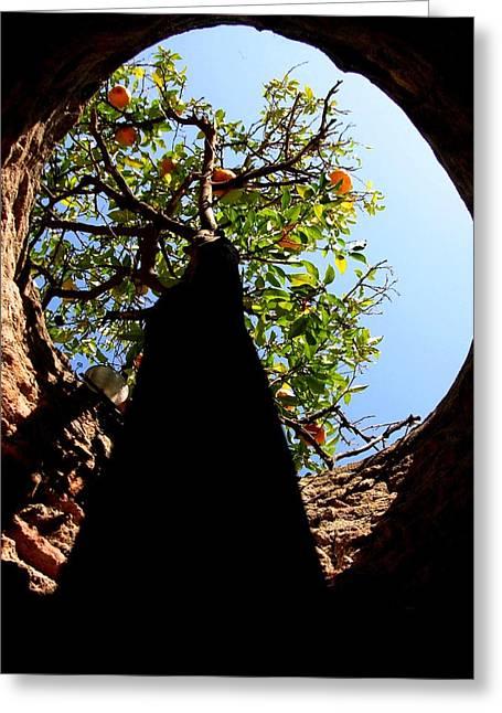 Orange Greeting Cards - Underground Tree Greeting Card by Elizabeth Hoskinson