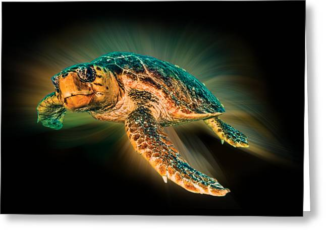 Abstract Beach Landscape Greeting Cards - Undersea Turtle Greeting Card by Debra and Dave Vanderlaan
