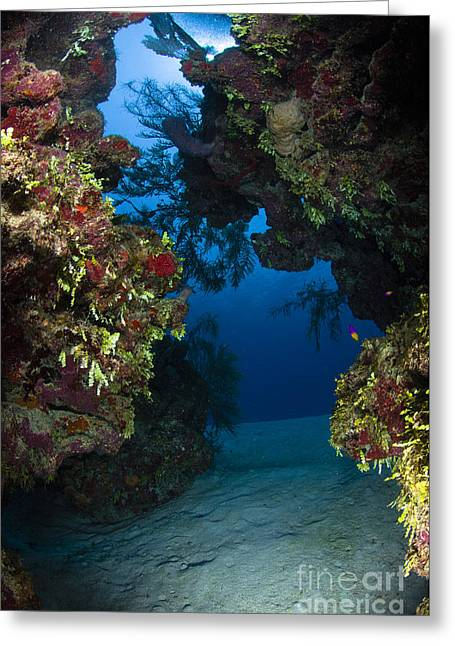 Cnidaria Greeting Cards - Underwater Crevice Through A Coral Greeting Card by Todd Winner
