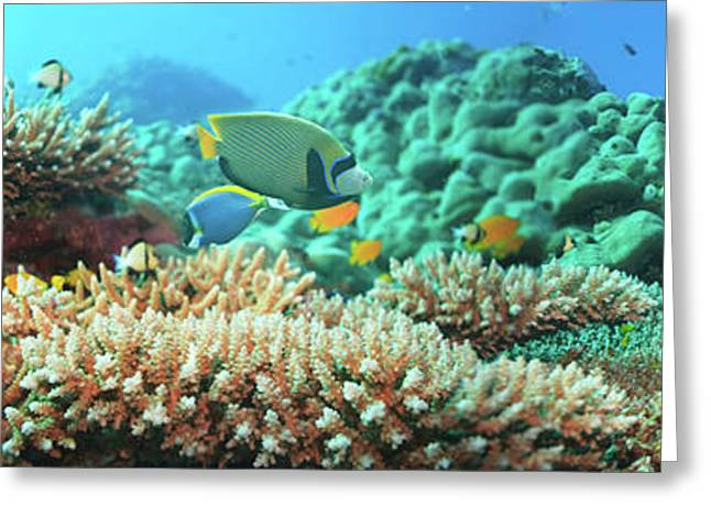 Sea Animals Greeting Cards - Underwater panorama Greeting Card by MotHaiBaPhoto Prints