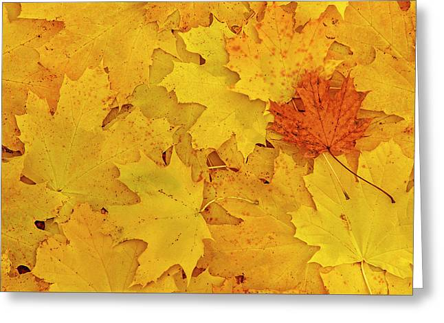 Understory Greeting Card by Tony Beck
