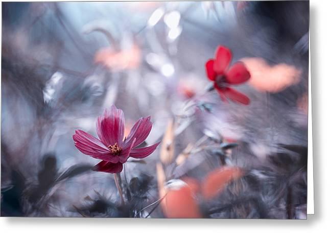Flower Macro Greeting Cards - Une Autre Fleur, Une Autre Histoire Greeting Card by Fabien Bravin
