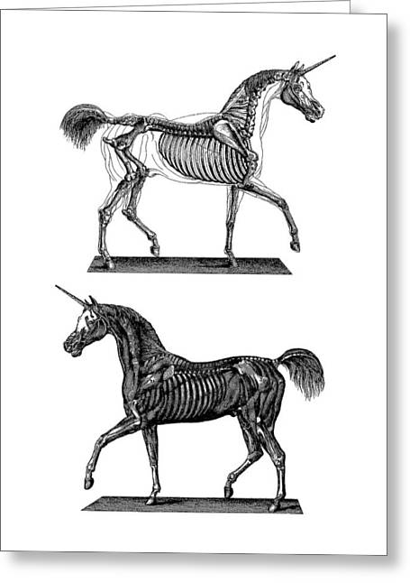 Unicorn Anatomy Greeting Card by Madame Memento