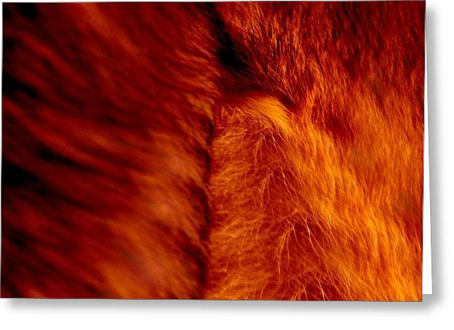 Untamed Vortex Greeting Card by P Russell