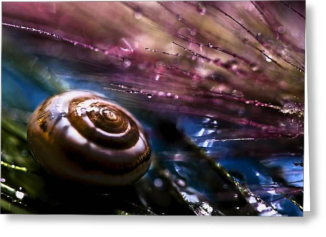 Shells Greeting Cards - Untitled Greeting Card by S. Amer