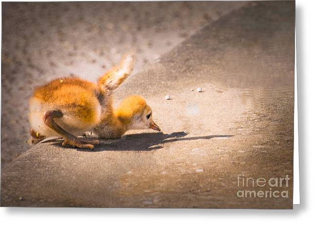 Up And Over The Curb Greeting Card by Zina Stromberg