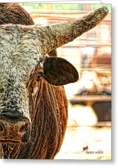 Brahma Bull Greeting Cards - Up Close and Personal Greeting Card by Karen White