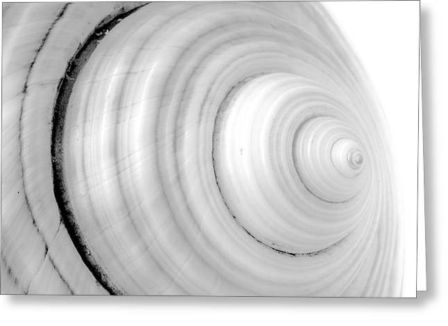 Abstract Nature Greeting Cards - Up close view of part of a conch. Greeting Card by Jacques Jacobsz
