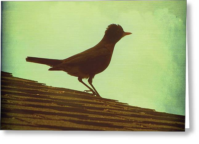 Up on a Roof Greeting Card by Amy Tyler