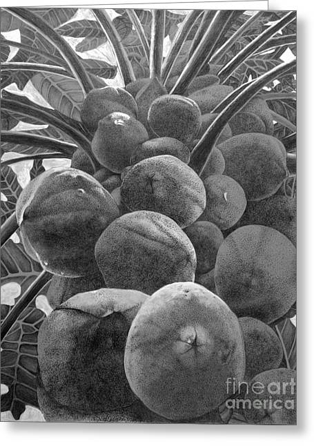 Pen And Paper Greeting Cards - Up The Papaya Tree Greeting Card by Debi Bond